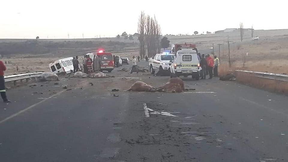 Driver hits 14 Cows
